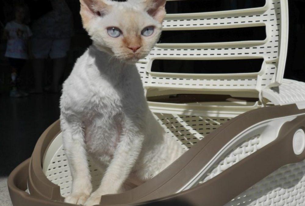 Międzynarodowa Wystawa Kotów Rasowych – OSTRAWA 3-4.10.2015